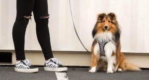 Fresh Pawz, il nuovo brand di streetwear per cani che non ti aspettavi